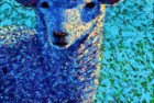 Blue Without Ewe